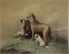 Original 1880 Engraving - Alfred Lucas after Landseer - Highland Dogs Deerhound