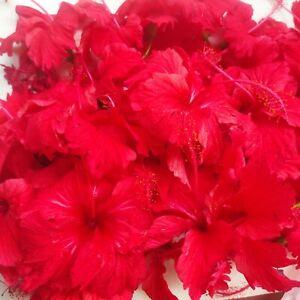 75 Organic Dried Hibiscus Flowers Herb Tea, Hibiscus Sabdariffa, Hair Grow