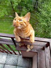siatka dla kota na balkon okno przed ptaki, ptakom