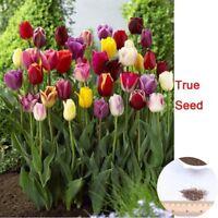 100 Pcs / Pack Tulip Seeds,tulipa Gesneriana,potted Plants, Planting Seasons, Fl