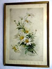 Chromo gravure Art Nouveau encadrée, signée C. KLEIN: Bouquet de Marguerites