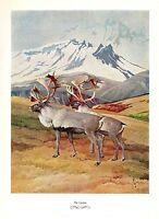 "1957 Vintage FRANCIS LEE JAQUES ""CARIBOU"" FABULOUS Color Art HUNTING Lithograph"