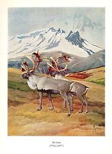 """1957 Vintage FRANCIS LEE JAQUES /""""TIMBER WOLF/"""" AWESOME Color HUNTING Lithograph"""
