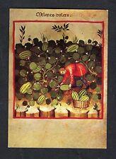 Posted 1981 Art Card: Theatrum Sanitatis: Man Cutting Melons: UNICEF