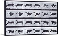 ARTCANVAS Cat Running Canvas Art Print by Eadweard Muybridge