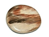 Petrified Wood Natural Flat Worry Stone Quartz Crystal Healing Tumbled Root