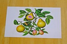 RHS FRUIT & VEGETABLE POSTCARD ~ CHINESE APPLE & GUAVA BY WANG LIU CHI, c1800