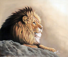 Young Male Lion Portrait Resting Africa Safari Wild Oil Painting 20X24 Stretched