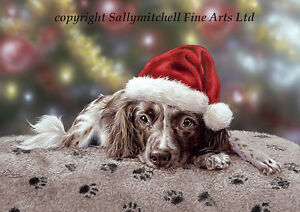 Springer Spaniel Christmas cards pack of 10 by Paul Doyle. C392x