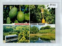 B9351cgt Australia NSW Tweed Valley Avocadoland Multiview postcard