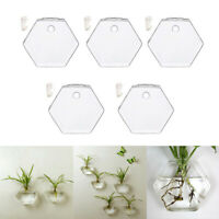 5-Pack Wall Plant Terrariums Glass Hanging Planter Hexagon Air Plants Holder