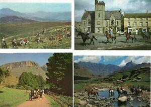 10 postcards:   HORSES PONY TREKKING