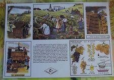 Création Affiche scolaire Set de Table Rossignol Vendange Vigne Raisin Format A3