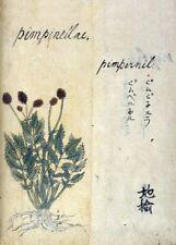 """Pimpinella """"Un Japonais à base de plantes"""" 17th Century plant Anatomy Poster"""