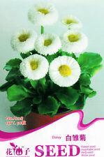 1 Pack 50 White Daisy Seeds Bellis Perennis Marguerite Garden Flowers A228