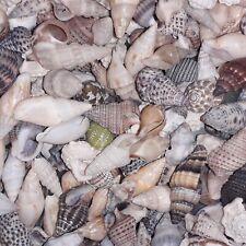 mini Coquillages de mer lot de 50