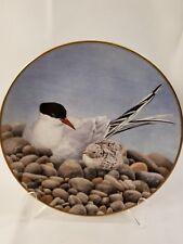 "Danbury Mint Collector Waterbird Plates TERN 9.5"""