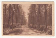 *** Nos Landes - Une route dans la forêt landaise *** SD - CPA 1281