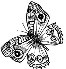 Wood Mounted Rubber Stamp, Butterfly Stamps, Butterflies, Painted Lady Butterfly