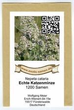 Echte Katzenminze (ohne Citral) - Nepeta cataria - 1.200 Samen