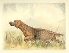 IRISH RED SETTER GUN DOG FINE ART PRINT ENGRAVING by Ruben Ward Binks