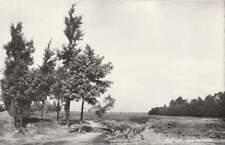 Ansichtkaart Nederland : Elspeet - Bos en Heide (boxb0165)