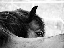 PHOTOGRAPHY ANIMAL BLACK WHITE HORSE MANE EYE ART PRINT POSTER MP3254A