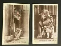 1920's TUCK'S post card Regents Park Zoo Lioness Caroline & pub unused