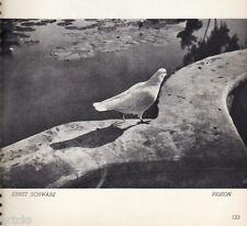 Photogravure  - 1935 - Pigeon - Ernst Schwarz