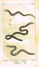 "Lacepede's Oeuvres du Comte - ""LE ROUGE - SNAKES"" - Lithograph - 1833"