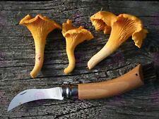 Cuchillo De Alimentos Fotografía hongo seta hongo Art Print MP5672A