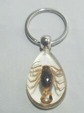 Real Scorpion Key Chain Key Ring Gold Scorpion in Clear Resin