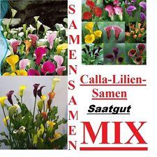 25x Cala Lirios Flores Semillas Simiente Planta Rareza Fresco Semillas #113