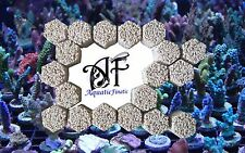 Frag rock hexagon blocks full box 60 plugs marine live rubble coral zoas sps lps
