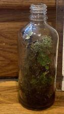 Mini terrarium kit with jar. Live Moss assortments: Spanish moss and more