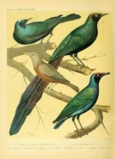 cassell's book of canaries & cage birds '@ parrots 1 LITHOGRAPH 1s ed c1875