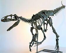 ALLOSAURUS Dinosaur MOUNTED baby Skeleton Fossil Replica - 9 ft long * LIFE SIZE