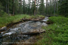 GOLD MINE Historic Georgetown Lake MT Gold Tom Placer Gold Mining Claim