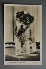 R&L Postcard: Guy Withers Photo, Wire Haired Fox Terrier Puppy Dog
