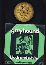Greyhound - Black and White - Sand in Your Shoes - HOLLAND