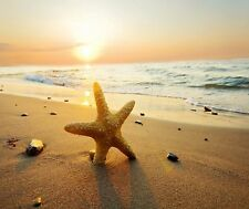 STARFISH TROPICAL BEACH AT SUNSET  COMPUTER MOUSE PAD 9 X 7