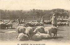CPA AFRIQUE ALGERIE SUR UN MARCHE ARABE MOUTON