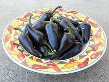 Purple Jalapeno hot chili pepper seeds non-gmo heirloom open pollinated