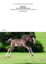 Greeting cards New Forest Foal
