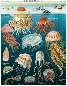 Cavallini & Co - Jellyfish 1000 Piece Jigsaw Puzzle - FREE SHIPPING - NEW