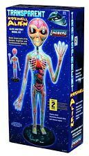 Transparent Roswel Alien model kit Parts of Skeletal Digestive Cardiovascular