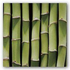 PHOTOGRAPHY ART PRINT Bamboo Lengths Boyce Watt
