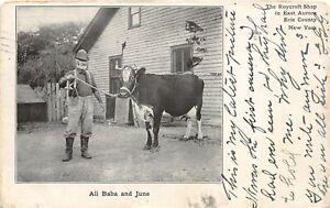 H54/ East Aurora New York Postcard 1907 Roycrof Shop Ali Baba Cow June 90