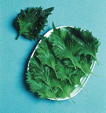 Salad - Perilla - Shiso - Green - 900 Seeds