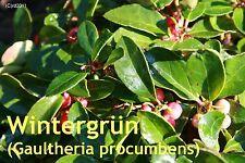 ***Wintergrünöl, naturreines ätherisches Öl, 50ml  (USA/China)